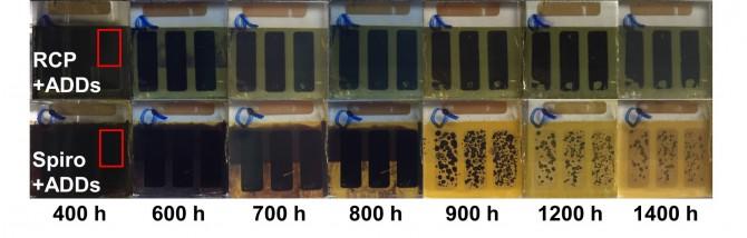 연구진이 개발한 소수성 첨가물을 바른 태양전지는 물에 넣어도 오랜 시간 안정돼 있다(위 사진), 하지만 기존에 사용하던 첨가물을 바른 태양전지는 물에 넣자 곧 손상됐다(아래 사진). - 포항공대 제공